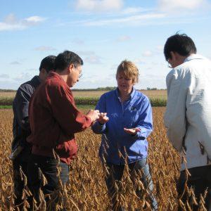 Woman showing soybeans to men in soybean field